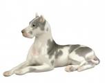 Lomonosov Spotted Great Dane Dog